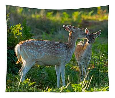 Fallow Deer Doe With Fawn Tapestry
