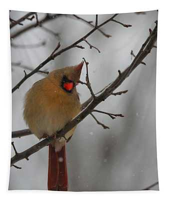 Female Cardinal In Winter Tapestry