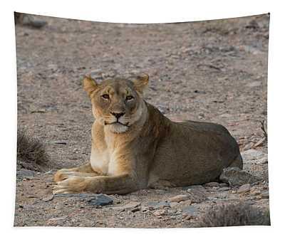 Female Lion Panthera Leo Resting Tapestry