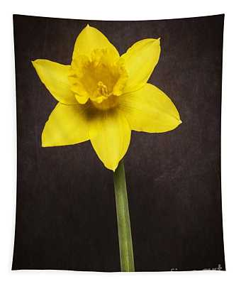 First Spring Daffodil Tapestry