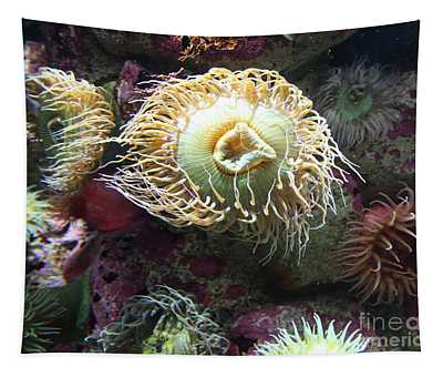Fish Eating Anemone 5d24899 Tapestry