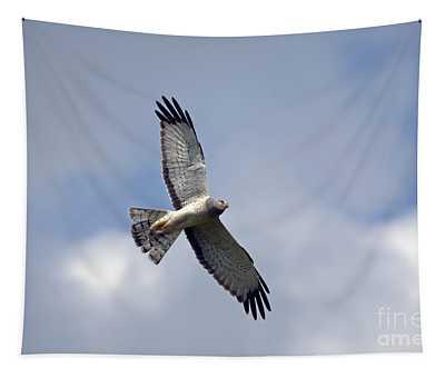 Flight Of The Harrier Tapestry