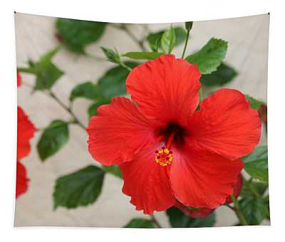 Floral Beauty  Tapestry