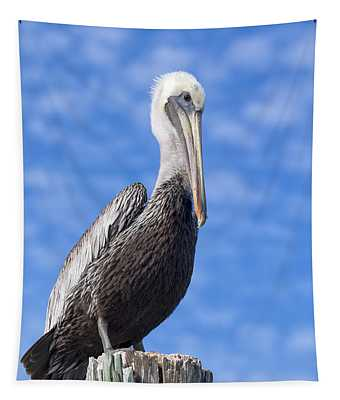 Tapestry featuring the photograph Florida Brown Pelican by Kim Hojnacki