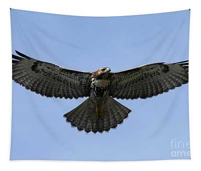 Flying Free - Red-tailed Hawk Tapestry