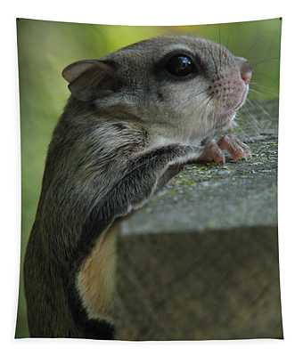 Flying Squirrel Tapestry