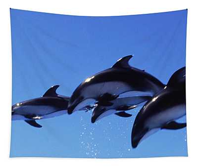 Four Bottle-nosed Dolphins Tursiops Tapestry
