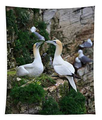 Gannets Nesting On The Side Of A Cliff Tapestry