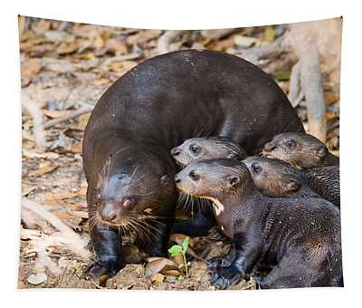 Giant River Otter Wall Tapestries