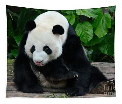 Giant Panda With Tongue Touching Nose At River Safari Zoo Singapore Tapestry
