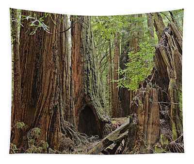 Giant Redwoods Muir Woods Tapestry