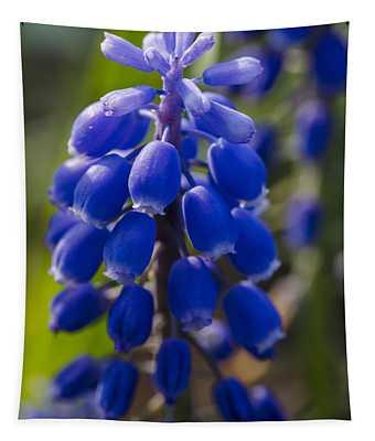 Grape Hyacinth Tapestry