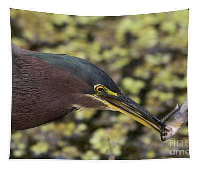Green Heron Fishing Tapestry