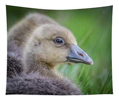 Greylag Goslings, Iceland Tapestry
