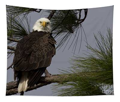 Harriet The Bald Eagle Tapestry