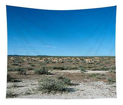Herd Of Springboks Antidorcas Tapestry
