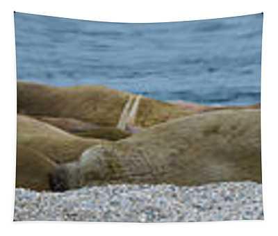 Herd Of Walrus Odobenus Rosmarus Tapestry