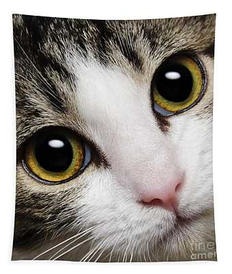 Here Kitty Kitty Close Up Tapestry