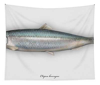 Herring  Clupea Harengus - Hareng - Arenque - Silakka - Aringa - Seafood Art Tapestry