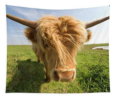 Highland Cow, North Yorkshire, England Tapestry