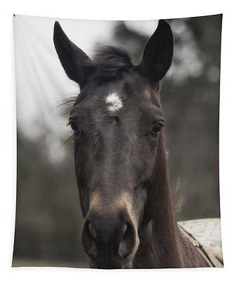 Horse With Gentle Eyes Tapestry