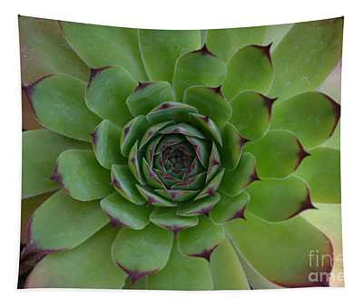 Houseleek Sempervivum Tapestry