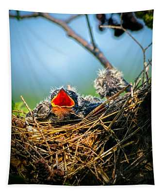 Hungry Tree Swallow Fledgling In Nest Tapestry