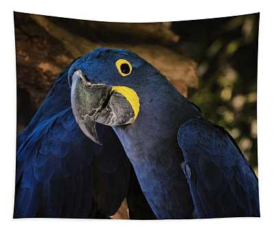 Hyacinth Macaw Tapestry