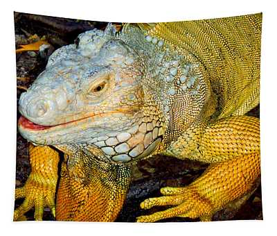 Iggy Tapestry