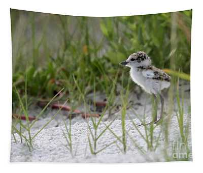 In The Grass - Wilson's Plover Chick Tapestry