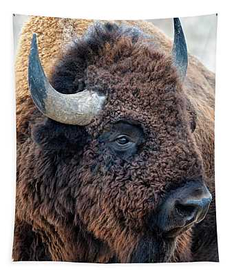 Bison The Mighty Beast Bison Das Machtige Tier North American Wildlife By Olena Art Tapestry