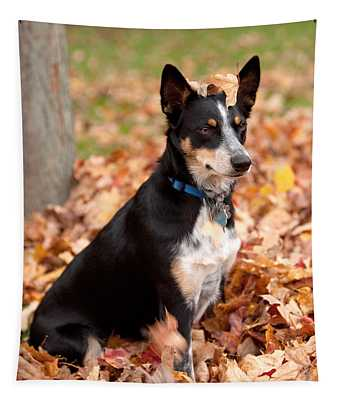 Australian Kelpie Wall Tapestries