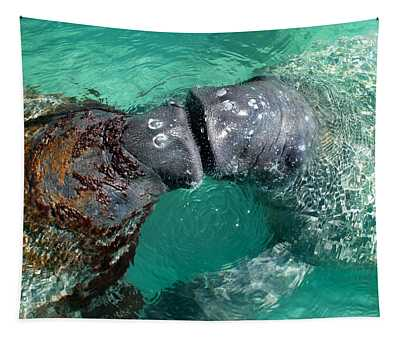 Kissing Manatees Near Harbour Island Tapestry