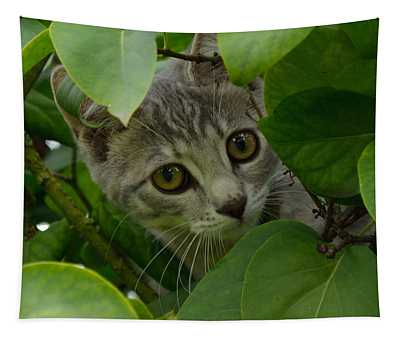 Kitten In The Bushes Tapestry