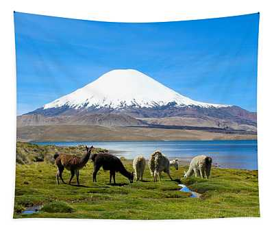 Lake Chungara Chilean Andes Tapestry