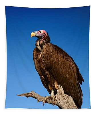 Lappetfaced Vulture Against Blue Sky Tapestry