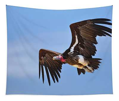 Lappetfaced Vulture Tapestry