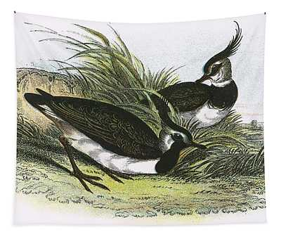 Lapwing Photographs Wall Tapestries