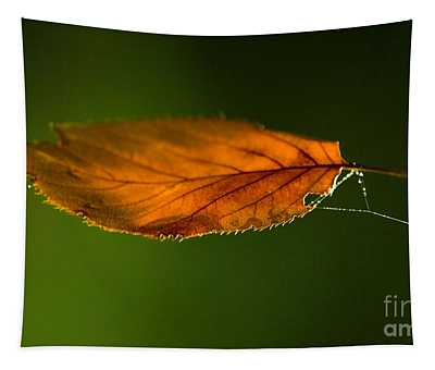 Leaf On Spiderwebstring Tapestry