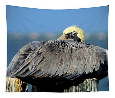 Let Sleeping Pelicans Lie Tapestry