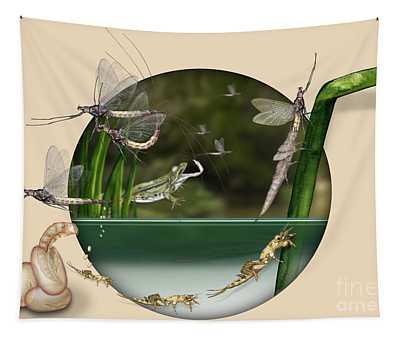 Life Cycle Of Mayfly Ephemera Danica - Mouche De Mai - Zyklus Eintagsfliege - Stock Illustration - Stock Image Tapestry