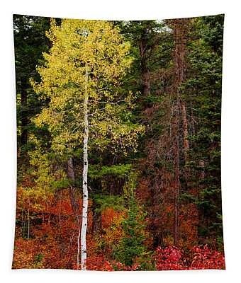 Lone Aspen In Fall Tapestry