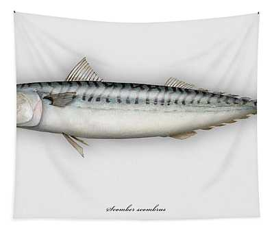Mackerel Scomber Scombrus  - Maquereau - Caballa - Sarda - Scombro - Makrilli - Seafood Art Tapestry