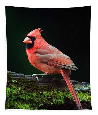 Male Northern Cardinal Cardinalis Tapestry