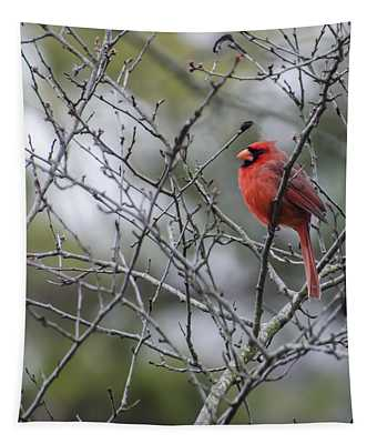 Male Northern Cardinal Tapestry