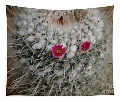 Mammillaria Geminispina Tapestry