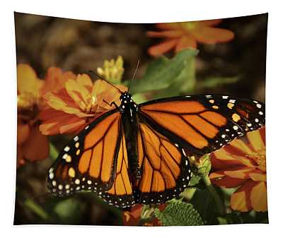 Monarch Spotlight. Tapestry