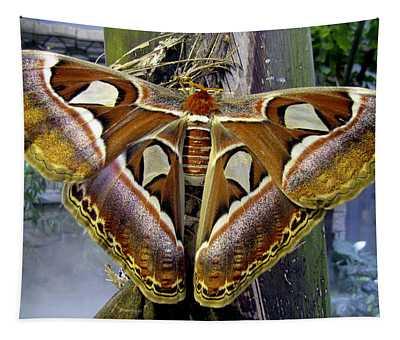 Atlas Moth Tapestry