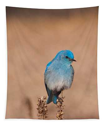 Mountain Bluebird Tapestry