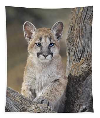 Mountain Lion Cub Tapestry